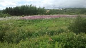 Flori de câmp, una din multele zone înflorite