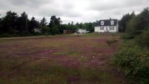 Peluza cu buruieni violet